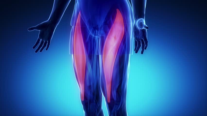 膝が痛い!そんな時にほぐしたい筋肉 その①【大腿直筋】