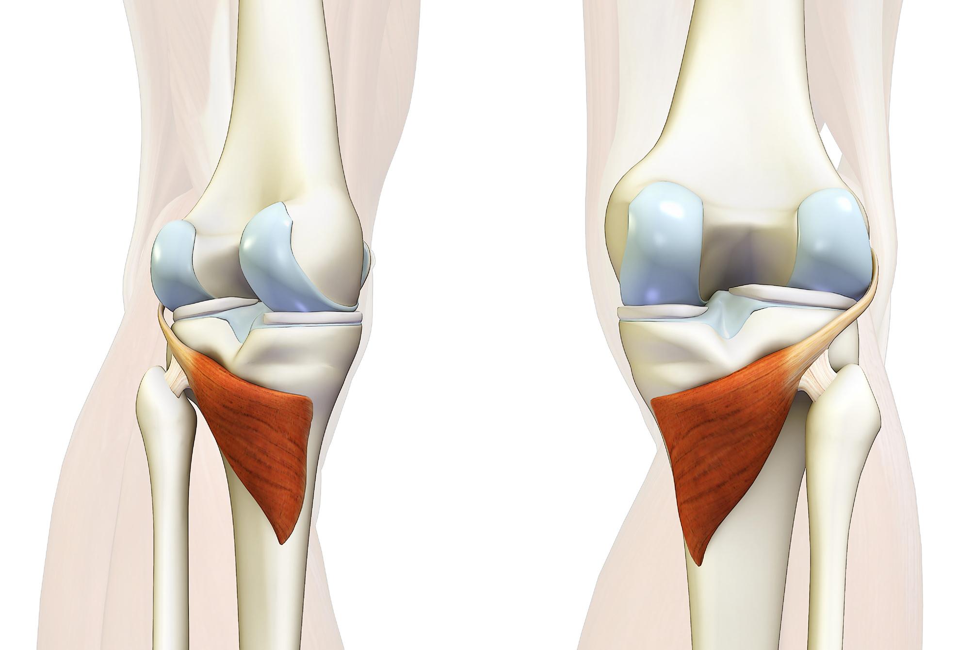 膝が痛い!そんな時にほぐしたい筋肉その3【膝窩筋】