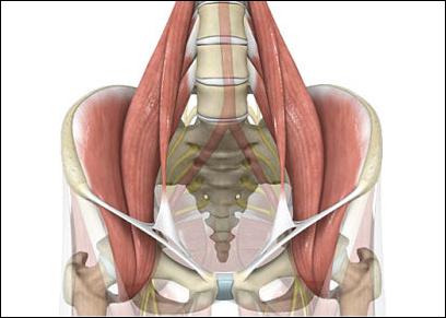 腰が痛い!そんな時にほぐしたい筋肉その2【腸腰筋】