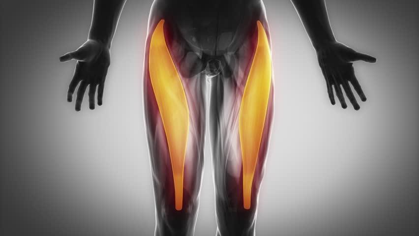 【膝に痛みや違和感があるときに】この筋肉をほぐしてみよう【第一弾 大腿直筋】