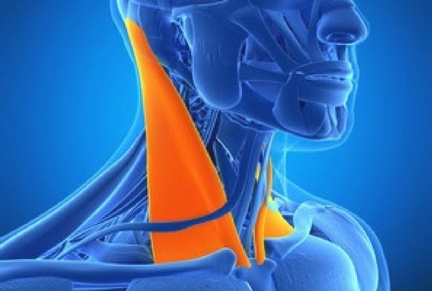 【首の痛みやコリがあるときに】この筋肉をほぐしてみよう【第一弾 胸鎖乳突筋】